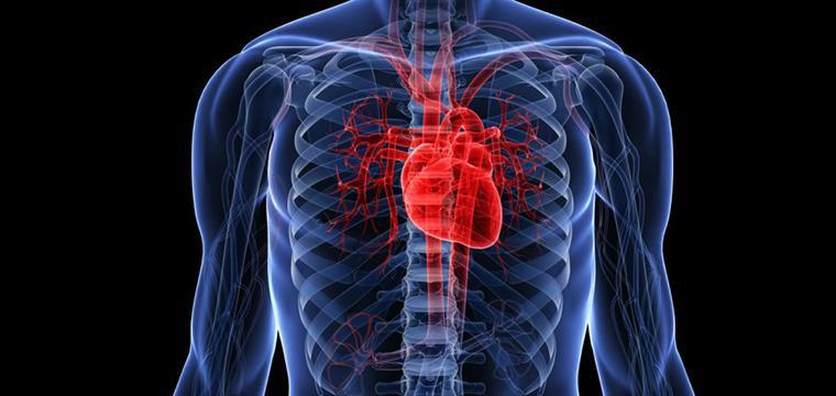 Коронавирус и сердечно-сосудистые заболевания: не прекращайте принимать лекарства! 1